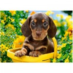 Puzzle  Castorland-018161 Puppy in Yellow