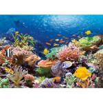 Puzzle  Castorland-101511 Récif de Corail