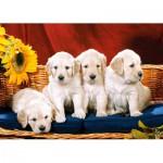 Puzzle  Castorland-101771 Petits chiens dociles