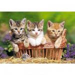 Puzzle  Castorland-51168 Trois petits chatons