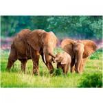 Puzzle  Castorland-52196 Famille d'Eléphants