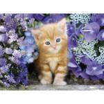 Puzzle  Clementoni-30415 Chaton dans les Fleurs