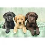 Puzzle  Clementoni-39279 Trois Labradors