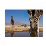 Puzzle  Clementoni-39356 National Geographic: Zèbre