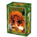 DToys-50199-DG01 Mini Puzzle - Animaux domestiques - Boule de poils roux