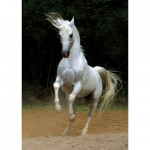 Puzzle  DToys-65988-PH01 Cheval blanc