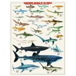 Puzzle  Eurographics-6000-0264 Requins dangereux