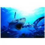 Puzzle  Eurographics-6000-0299 Requin affamé