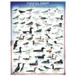 Puzzle  Eurographics-6000-0317 Oiseaux du littoral