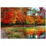 Puzzle  Eurographics-6000-0545 Forêt de Sharon - Ohio