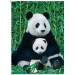 Puzzle  Eurographics-8000-0173 Panda et son bébé
