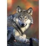 Puzzle  Grafika-Kids-00516 Loup