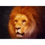 Puzzle  Grafika-Kids-00950 Lion