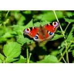 Puzzle  Grafika-Kids-01228 Pièces magnétiques - Papillon