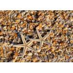 Puzzle  Grafika-Kids-01232 Pièces magnétiques - Coquillages et Etoiles de Mer