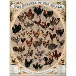 Puzzle  Grafika-00083 Affiche Les Poulets du Monde, 1868