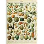 Puzzle  Grafika-00592 Illustration du Nouveau Larousse Illustré : Fruits , XIXè Siècle