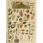 Puzzle  Grafika-00602 Illustration du Larousse pour Tous : Mollusques , XIXè Siècle