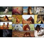 Puzzle  Grafika-01213 Collage - Chevaux