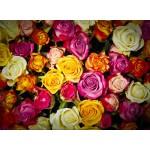 Puzzle  Grafika-01480 Roses