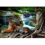 Puzzle  Grafika-01561 Tigre