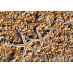 Puzzle  Grafika-01686 Coquillages et Etoiles de Mer