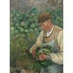 Puzzle  Grafika-02021 Camille Pissarro : Le Jardinier - Vieux Paysan avec Chou, 1883-1895