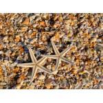 Puzzle   Coquillages et Etoiles de Mer