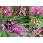 Puzzle  Jumbo-18354 Orchidées