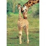 Puzzle  KS-Games-11250 Girafes