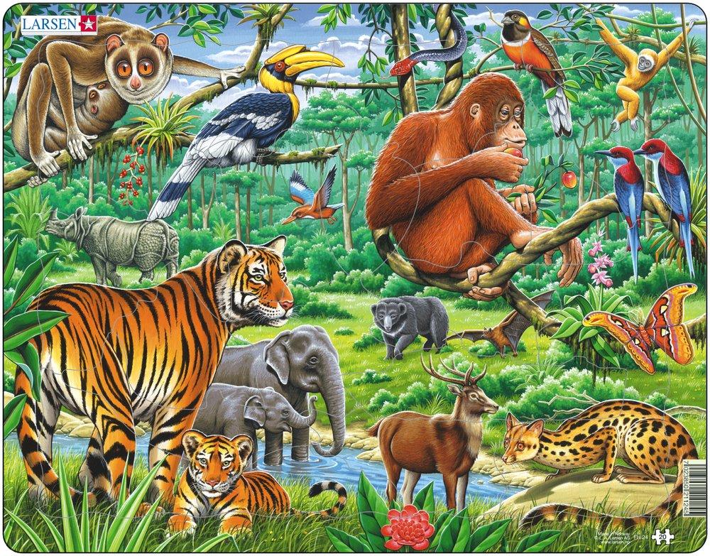 Puzzle Cadre Les Animaux De La Jungle Larsen Fh24 20 Pi Ces Puzzles Animaux Sauvages
