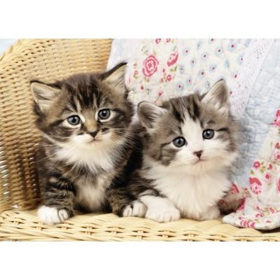 Résultat de recherche d'images pour 'image chatons'
