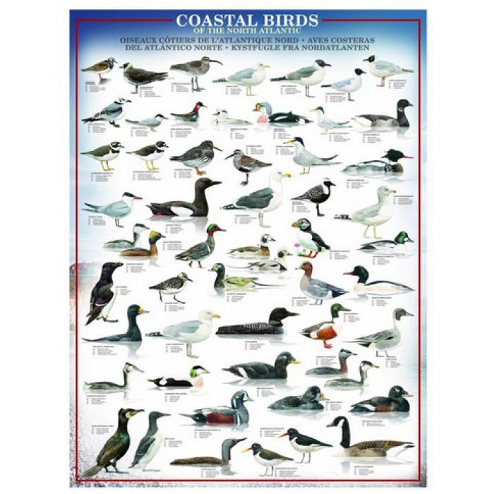 Puzzle Oiseaux du littoral Eurographics