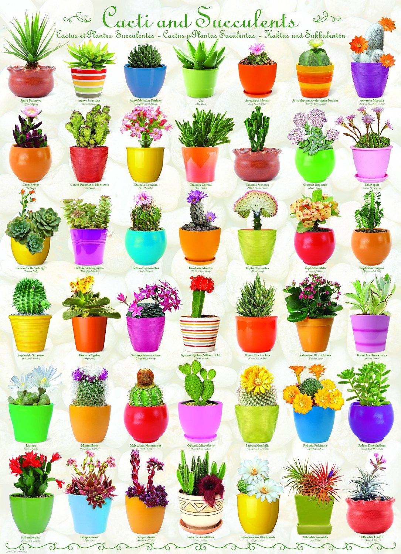 Puzzle Cactus et Plantes Succulentes Eurographics