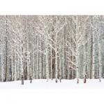 Puzzle  Master-Pieces-31632 World's Smallest - Winter Aspen