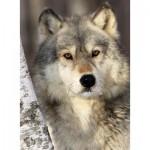 Puzzle  Nathan-87142 Le Regard du Loup