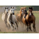 Puzzle  Nathan-87561 Horde de chevaux sauvages