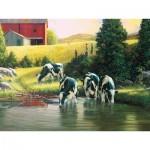 Puzzle  Cobble-Hill-52103 Pièces XXL - Douglas Laird - Holsteins