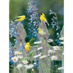 Puzzle  Cobble-Hill-52104 Pièces XXL - Susan Bourdet - Goldfinch Quartet