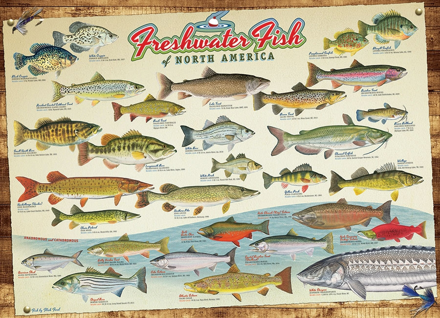 Puzzle poissons d 39 eau douce d 39 am rique du nord cobble hill for Fish usa coupon
