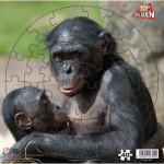 Puzzle  PuzzelMan-309 Singes Bonobo