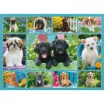 Puzzle  Ravensburger-14708 Collage - Chiots