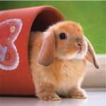 Puzzle  Ravensburger-15223 Mignon petit lapin