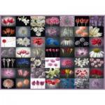 Puzzle   Collage Fleurs