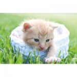 Puzzle  Tactic-53338 Chaton