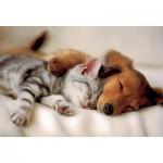 Puzzle  Trefl-16138 Chat et chien : la tendre sieste