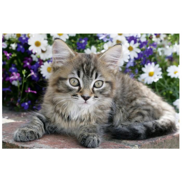 Chaton tigré dans les fleurs