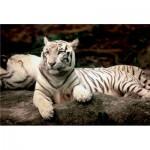 Puzzle  Trefl-26075 Tigre du Bengale