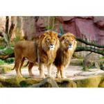 Puzzle  Trefl-26088 Lions