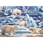 Puzzle   Ours Polaires